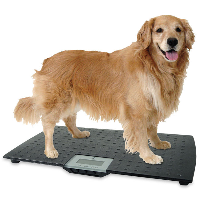 Large Precision Digital Pet Scale Scale